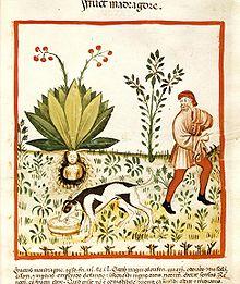 Immagine da Wikipedia